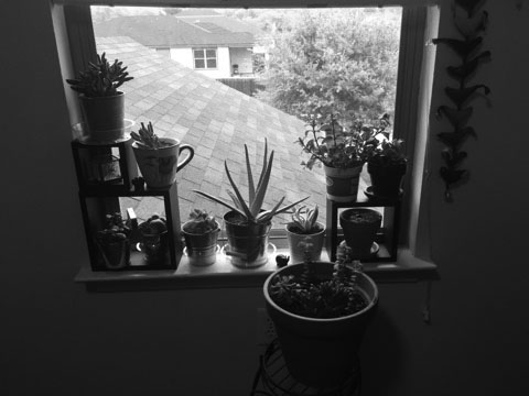 Mudong's plants bask in the sunlight from sitting on the window sill in her room.
